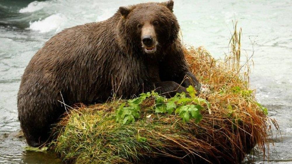 Urso é condenado à pena de morte por atacar pai e filho na Itália